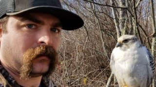 missing falcon found westborough