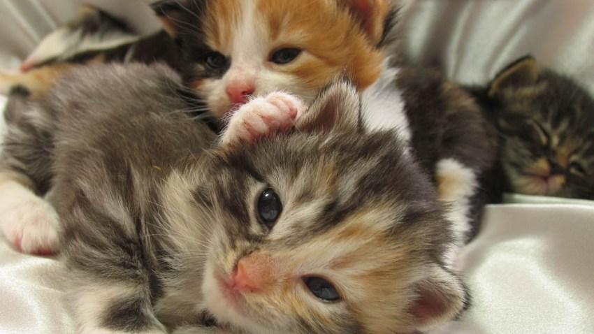 050818 kittens generic cats