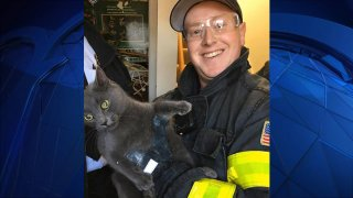 """""""Phoebe"""" the cat was rescued by the Hyannis Fire Department on Thursday, Jan. 23, 2020 after becoming stuck in the void of a wall."""