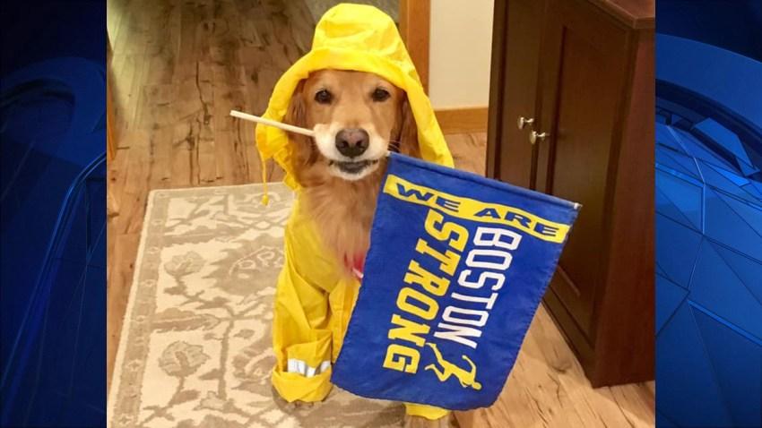 41519 marathon dog web thumbnail