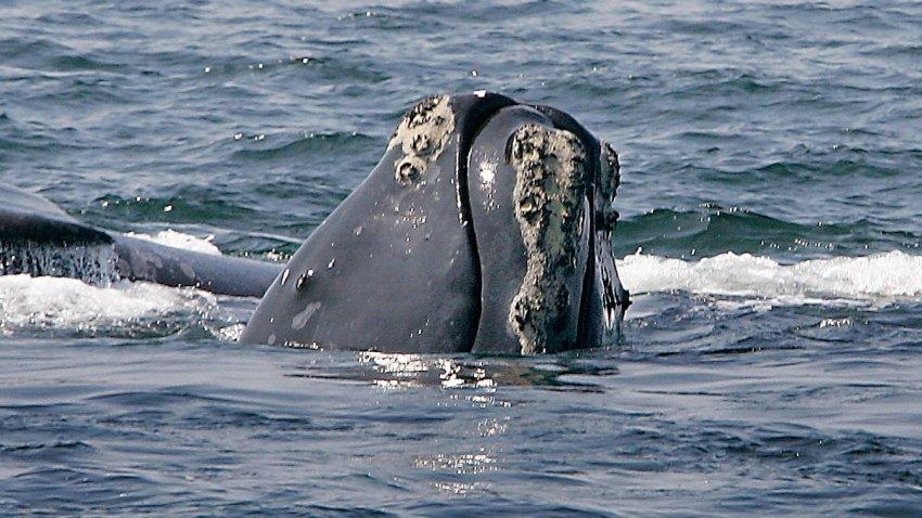 Whale App