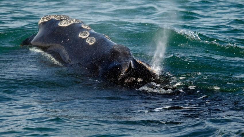 Government Shutdown Whales