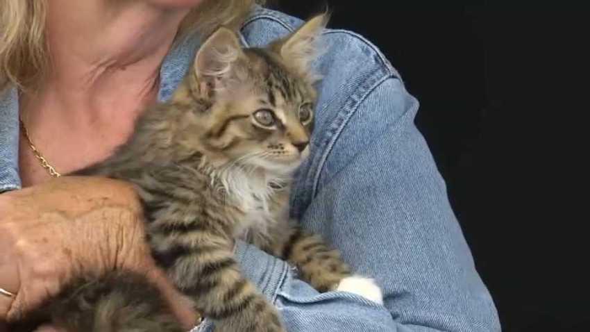 Abandoned kitten ARL