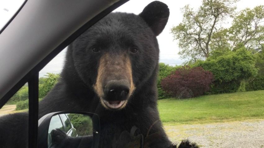 Bear Photo Smaller