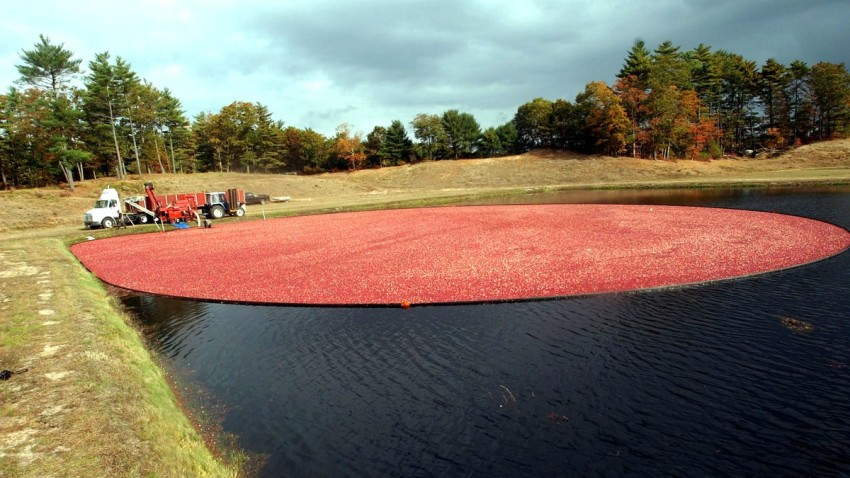 Getty Cranberry Generic Cranberry