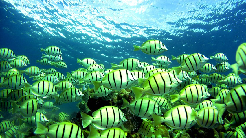 51997523DM004_Coral_Reefs