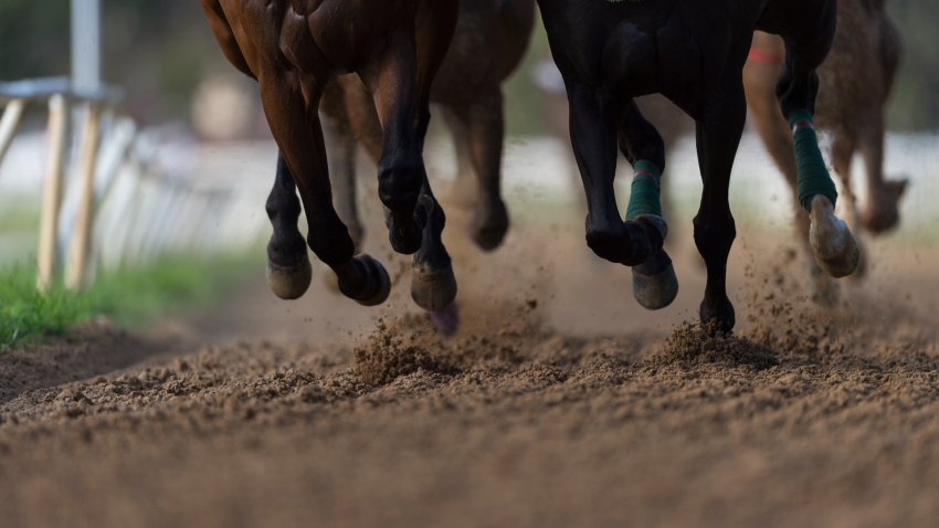 File image of horses racing