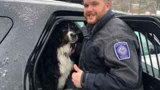 A dog rescued from an icy lake stands with the officer who saved it