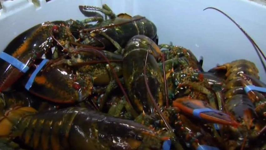 Lobster_Shortage_Is_Driving_Up_Prices.jpg