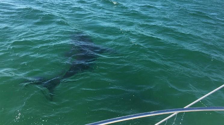 Shark 1 Boston Oct 18