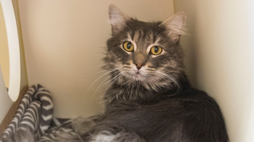 "An ""easy-going and friendly"" cat is searching for his forever home after he was found frozen and stuck to a shipping container in Dedham, Massachusetts."