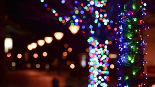 Multi-colored holiday lights stringed on trees.