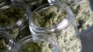 Marijuana New Jersey