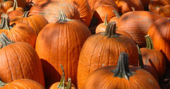 pumpkins-halloween-generic-oct17343