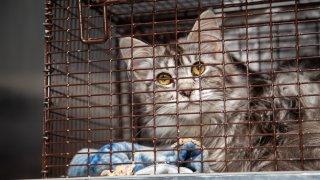 Edgartown animal cruelty