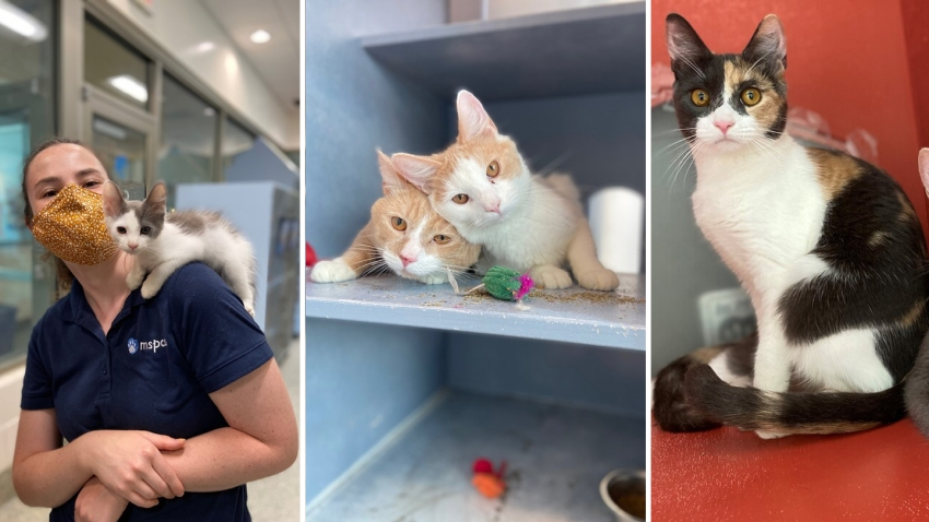 Cats rescued from a home in Brighton.