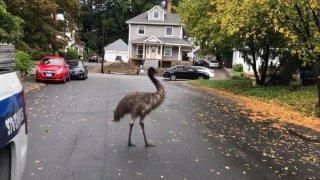 Haverhill emu
