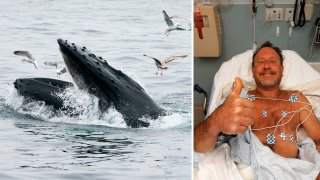 This May 10, 2018, file photo at left shows a humpback whale feeding near Gloucester, Massachusetts. At right is Michael Packard, a lobster diver who says he was swallowed into a humpback's mouth off Cape Cod.