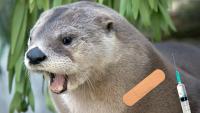 Even Zoo Animals Can Get the Coronavirus Vaccine Now