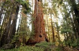 1. Giant Sequoia National Monument, California