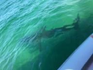sharktober1