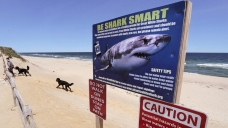 'Be Cautious': Cape Cod Shark Season is Upon Us