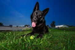See How This Dog Photographer Gives Back to Animal Shelters