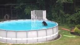 Bear Enjoys Cool Dip in Mass. Backyard Pool