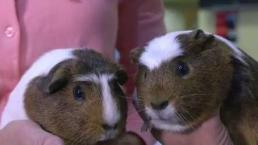Finding Animals Forever Homes At The MSPCA at Nevins Farm