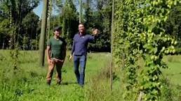 Hop Harvest at Saltbox Farm
