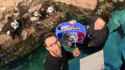 The Age of Aquariums