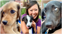 TOO CUTE: Puppies Storm City Hall Plaza for Wag Wednesdays