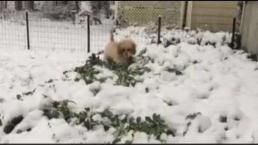 Puppy Sees Snow for 1st Time
