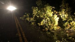 PICTURES: Downed Trees and More in Nor'easter Damage