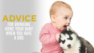 Simple Advice For Bringing Home a New Baby If You Have a Dog