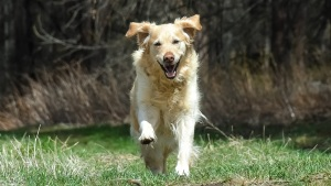 2019 Pet Trends: A Smarter Year for Dogs
