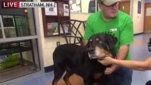 Orphaned Rottweiler Seeks Forever Home