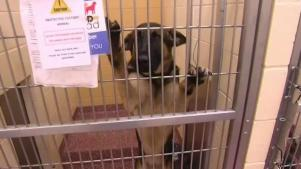 Helping Shelter Animals Who Can't Be Adopted