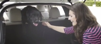 Keeping Families & Furry Friends Safe On The Go