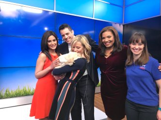 Introducing NBC10 Boston's Today Show Puppy