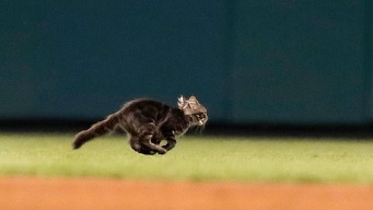 Cardinals, St. Louis Group in Spat Over 'Rally Cat' Custody