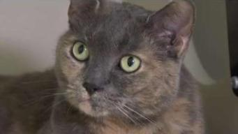 Adopt A Cat At Animal Rescue League