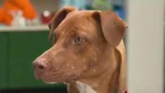 Adopt A Pet At Northeast Animal Shelter