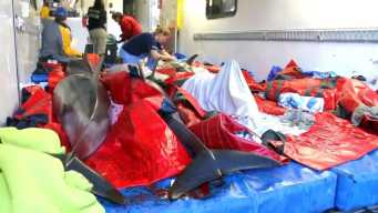 2 Dolphins Dead, 12 Rescued After Becoming Stranded