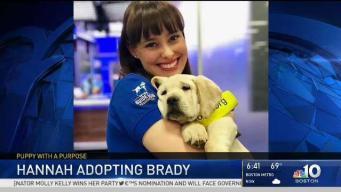 Bittersweet: NBC10 Boston Puppy's Last Day