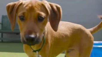 Clear the Shelters: Adopt a Pet at Northeast Animal Shelter