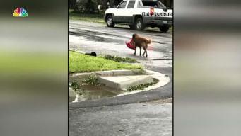 The Story Behind the Hurricane Harvey Viral Dog Photo
