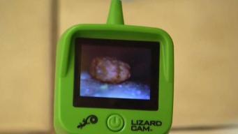 Does It Work: Lizard Cam