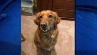 Dog Hurt by Alleged Naked Burglar