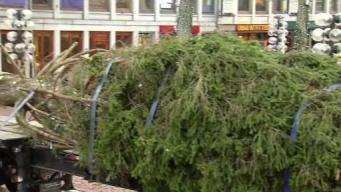It's Here! Faneuil Hall Christmas Tree Arrives in Boston